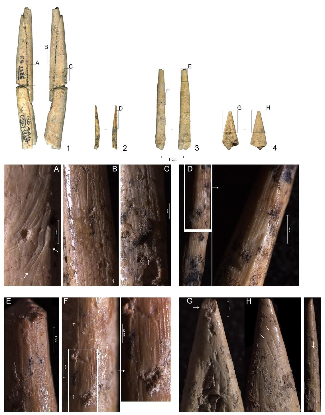Riparo del Broion strumenti in osso