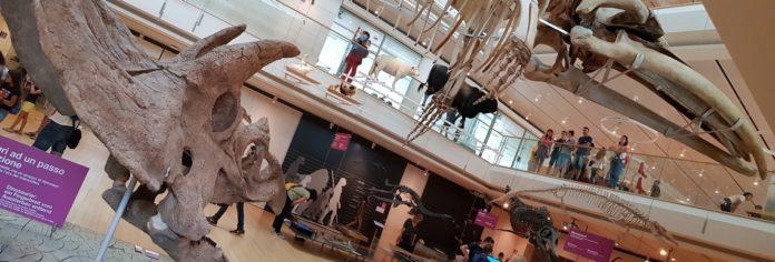 Muse dinosauri